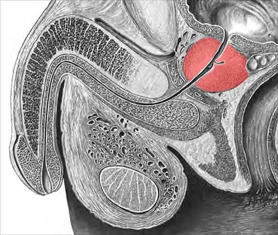 Machen prostata massage selber Sex laufhaus